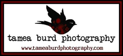 Tamea Burd Photography