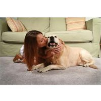 pet odour and stain removal